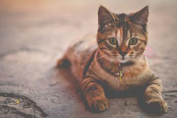 Кошки полезны для здоровья