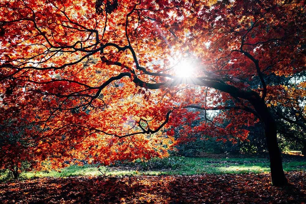 осенннее дерево