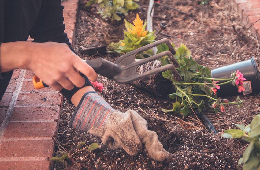 садоводство для того, чтобы улучшить здоровье
